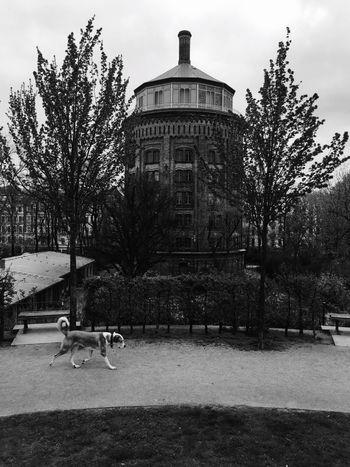 Dogs of Berlin. Berlin Wasserturm Dog Bigdog Walkingdog Blackandwhite Streetphotography Old Buildings