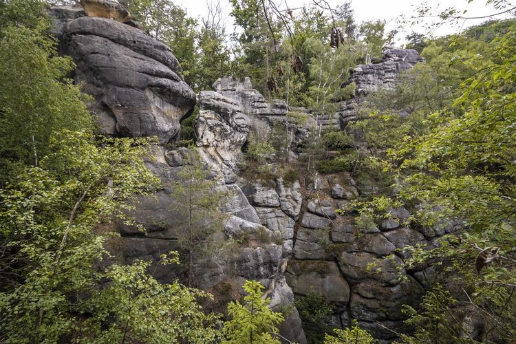 Rock formations in forest