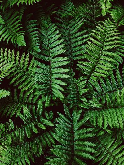 Green Color Full Frame Backgrounds No People Pattern Growth Plant
