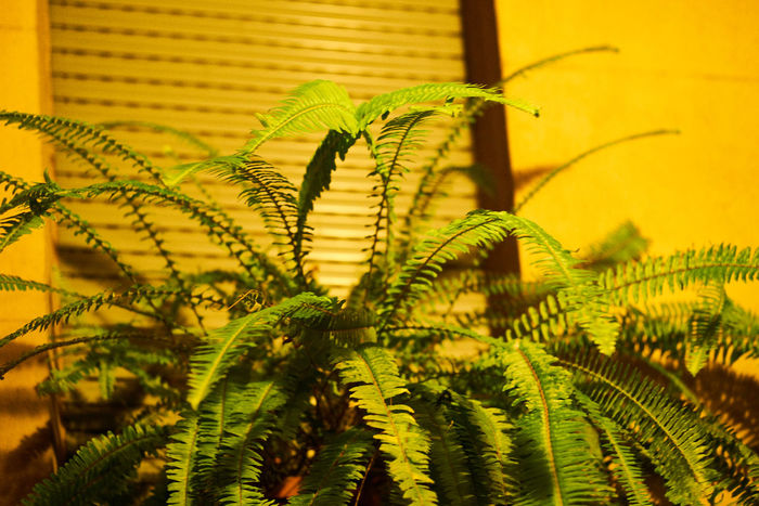 Beauty In Nature Close-up Day Ferm Fern Focus On Foreground Fragility Freshness Frond Green Color Growth Leaf Nature No People Outdoors Plant