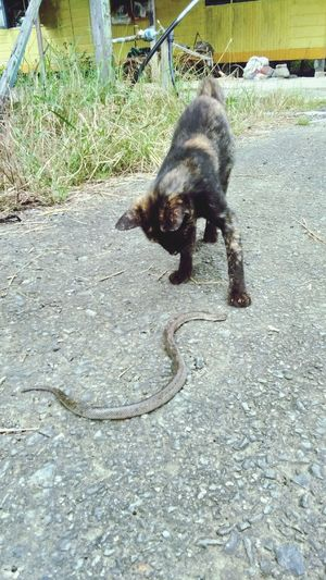 Cat Felinefascination Domestic Animals Pets Outdoors
