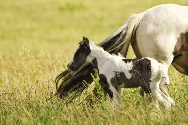 Mammal Domestic Animals Animal Themes Field Nature No People Outdoors Side View Full Frame Horse Photography  Horse Horse Photography  Young Animal Horse Photography  Animal_collection Animal Wildlife One Animal Beauty In Nature Landscapephotography Foal In Field Foal Horse Foal Foal