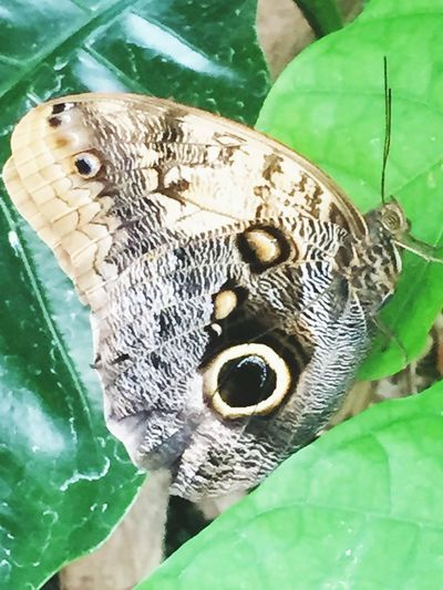 Close-up of butterfly perching on leaf in zoo