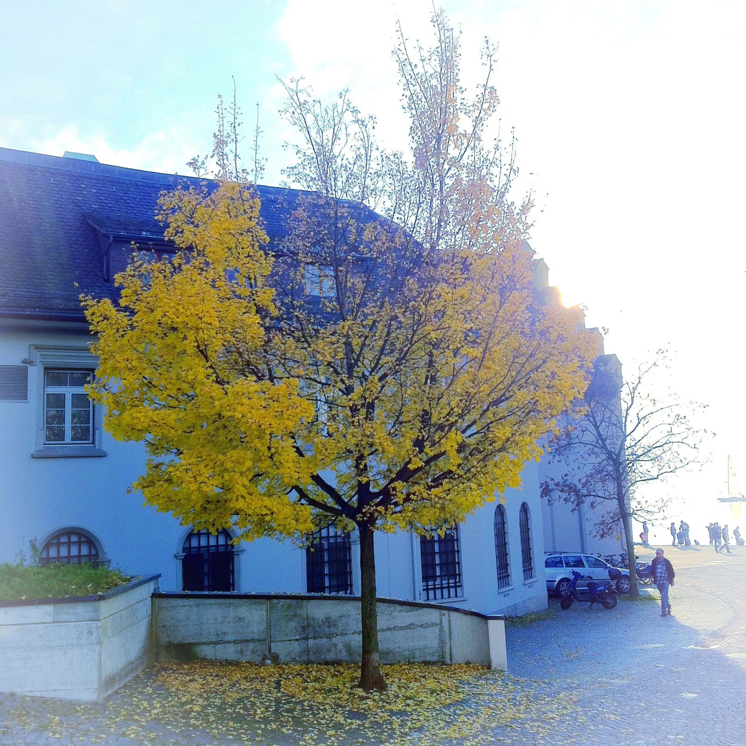 building exterior, built structure, architecture, autumn, change, season, tree, house, clear sky, sky, yellow, orange color, day, growth, residential building, residential structure, outdoors, nature, leaf, sunlight