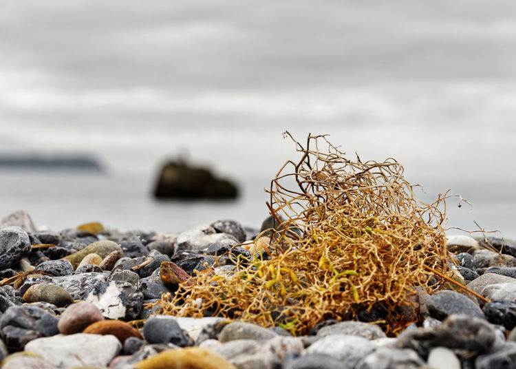 Autumn Autumn Colors Beach Days Beach Beach Colours Beauty In Nature Close-up Color Yellow Day Nature Nature Beach No People Outdoors Pebble Pebble Beach Rock - Object Sea Stones & Water Stones And Pebbles Tranquility Water Yellow Color