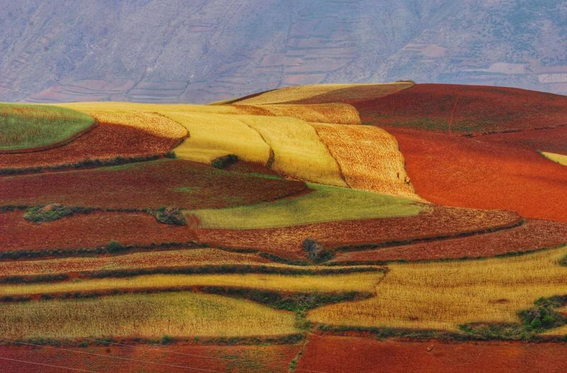 Yunnan China China Landscape Landscape_Collection Rural Scene Agriculture Multi Colored Terraced Field Yellow Field Landscape Rice Paddy Plowed Field Cultivated Land Plantation Agricultural Field Patchwork Landscape Rice - Cereal Plant Physical Geography Satoyama - Scenery