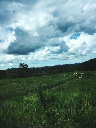 cloud&field