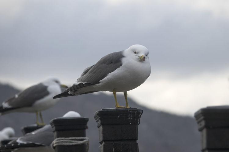 Bird perching on beach against sky