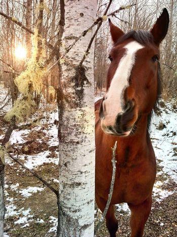 Found this random horse wandering