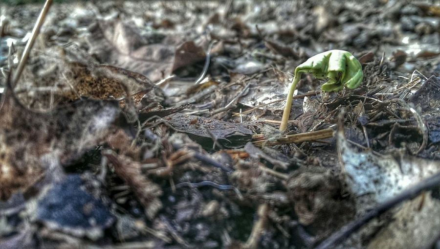 1st Birthday Seedling Notes From The Underground Forom Little Acorns New Life.... Getting In Touch Hdr Edit Close Up Winter Leaves Nature's Beauty