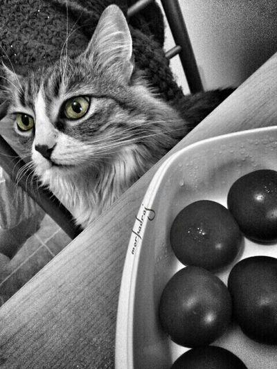 Cat Bnw_collection Blackandwhite Colorsplash