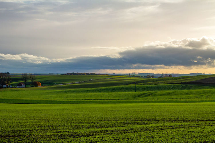 Landscape Scenics - Nature Cloud - Sky Field Sky Tranquil Scene Environment Land Agriculture Beauty In Nature Rural Scene Tranquility Green Color Plant Grass Nature Farm No People Growth Idyllic Outdoors Plantation Rolling Landscape