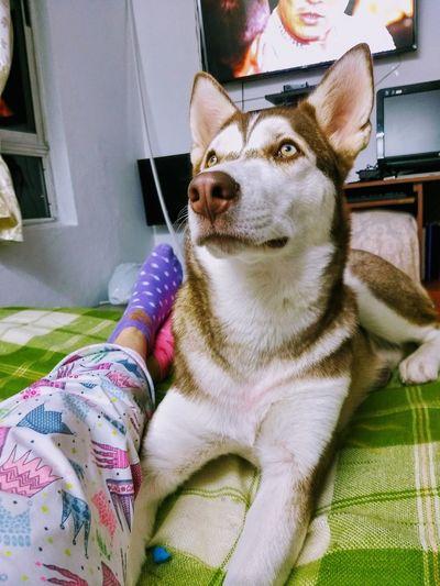 Dog Pets One Animal Domestic Animals Sitting Animal Themes Mammal