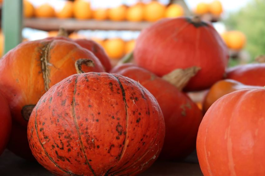 Kürbis Pumpkin Halloween Healthy Eating Food Food And Drink Wellbeing Freshness Fruit Close-up Focus On Foreground Orange Color Vegetable Still Life Large Group Of Objects No People Red Day Orange Ripe Indoors  Market For Sale