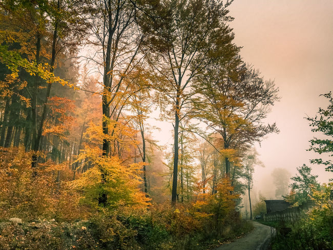 Autumn colours EyeEm Best Shots EyeEm Nature Lover EyeEm Gallery Lost In The Landscape Nature Photography Poland Poland Is Beautiful Polska Road Amazing Nature Autumn Beauty In Nature Bielawa Fog Forest Inspiration Is Every Where Landscape Leaf Nature Season  Sky Sunset Tranquil Scene Tranquility Tree