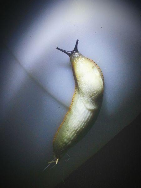 Slug Torchlight Nightphotography