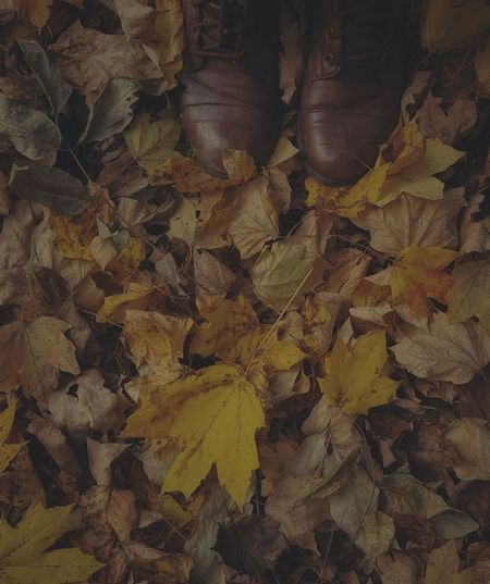 #fall #leaves
