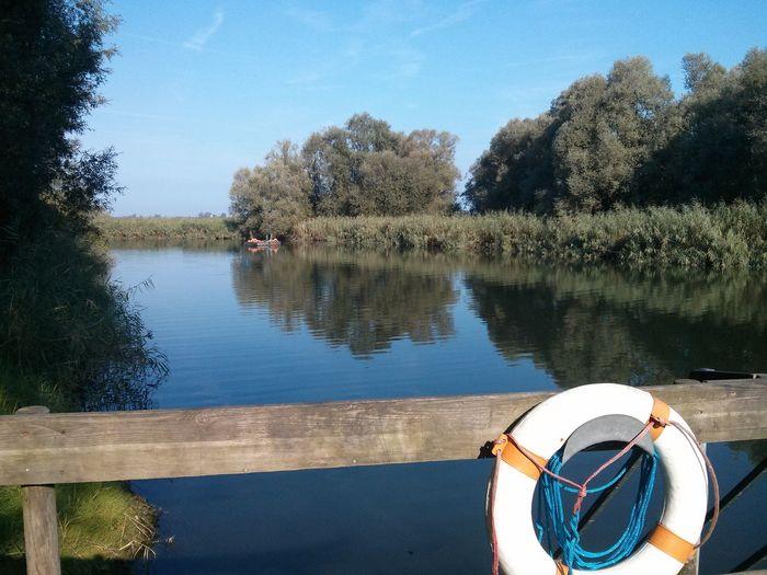 Life belt on bridge over river amidst trees