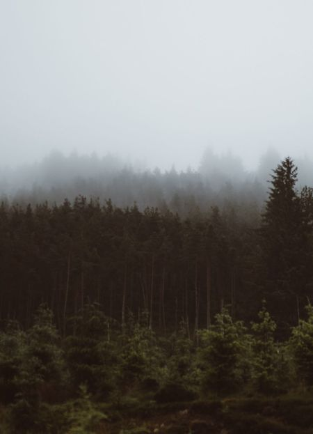 Layers. Tree Nature Tranquility Landscape Tranquil Scene Fog Beauty In Nature Forest No People Scenics Outdoors Mist Hazy  Day Sky