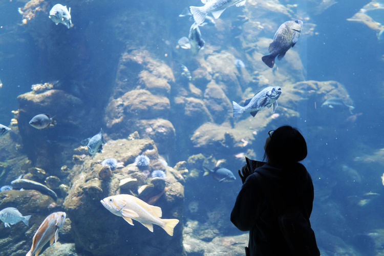 A6000 Aquarium Fish One Person Real People Silhouette Zeiss32mmf18