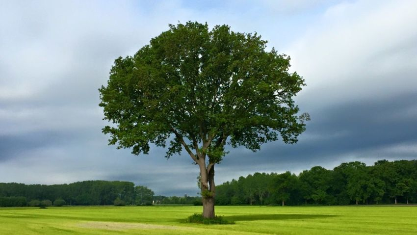 Tree Landscape Sky Growth Grass Field Green Color Tranquil Scene Perfect Tree Nature Tranquility Cloud - Sky Cloudy Scenics Tree Trunk Rural Scene Cloud Grassy Day Outdoors