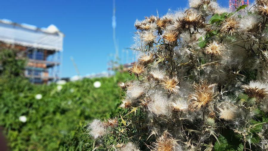 Die Rückeroberung Plant Focus On Foreground Botany Grass Thistle Thistle Thistle Flower Distel Retaking Rückeroberung Nature