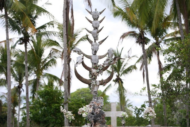 Low angle view of animal skeletons against palm trees