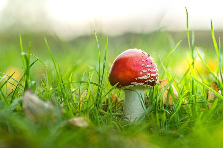 Close-up of mushroom growing on field