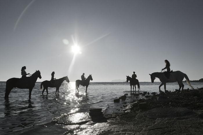 Horses Clear Sky Horses And Sea Leisure Activity Marsala Salina Nature Silhuette Sun Sunlight The Traveler - 2018 EyeEm Awards
