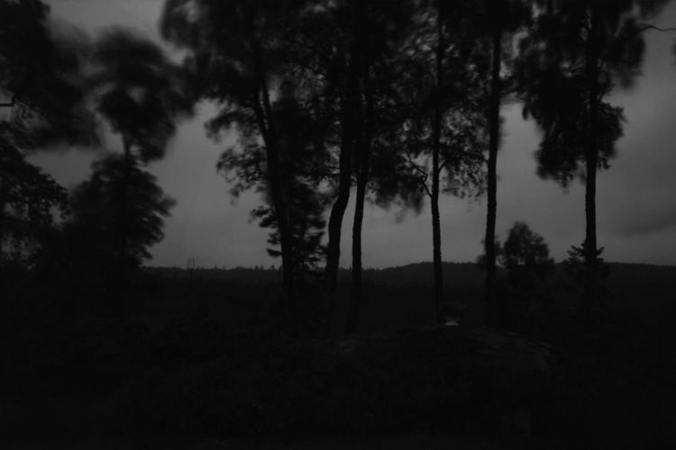 .::At the Doorsteps::. Black And White Excellence Hail Satan Melancholic Landscapes Landscape_Collection Intense Nothingness Black And White Landscape MADE IN SWEDEN Landscape_photography Tree_collection  Melancholy Depressive Landscapes Trees DCLXVI