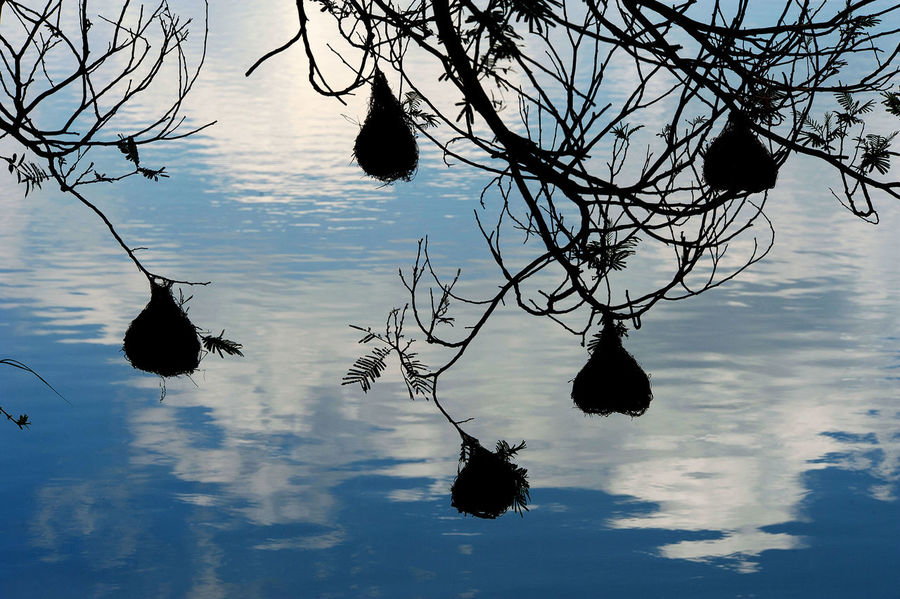 Bird Nests Beauty In Nature Branch Nature Reflection Silhouette Water Waterfront