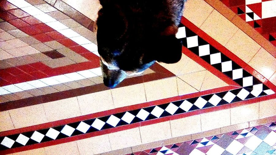 Low section of person standing on tiled floor