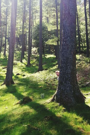 Boy hiding behind tree growing in forest