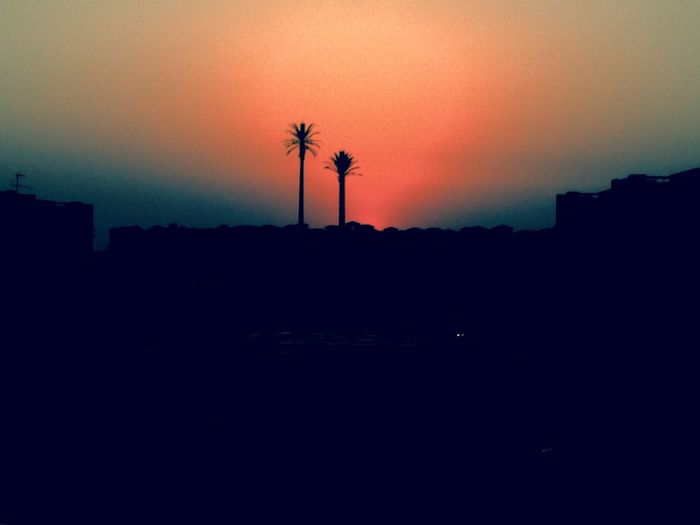 Sunset Palm Tree Sky Beauty In Nature Cairo