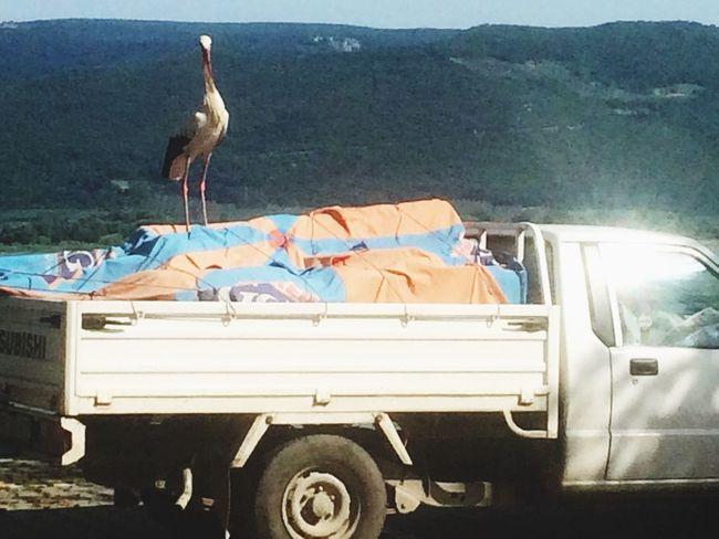 Stork Lake Gölyazı Bursa YollaraRevanOldum Leylek Balık Fish