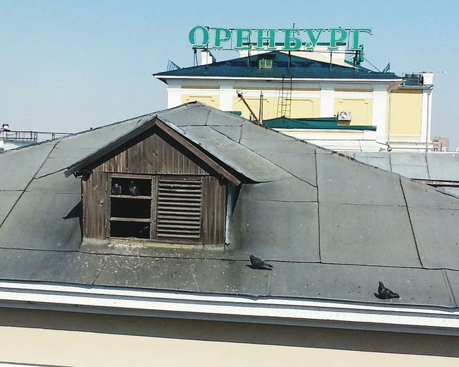 Голуби-оренбуржцы Оренбург крышиоренбурга