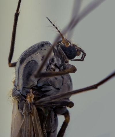 Bug Insect Nature Close-up Closeup Macro Macro Photography Macrophotography Focus Stacking