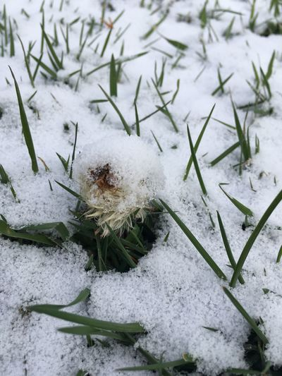 Nature Snow Cold Temperature No People Winter Close-up Beauty In Nature Unfiltered Treethugger Snow Covered Naturerox
