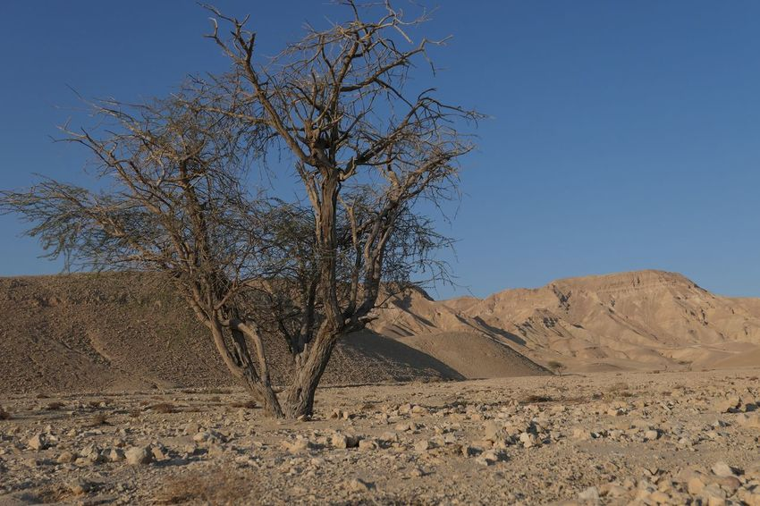 Israel Negev  Sky Tranquility Beauty In Nature Clear Sky Plant Land Nature Scenics - Nature Desert Landscape Day Tree Tranquil Scene Blue No People Environment Non-urban Scene Arid Climate Sunlight