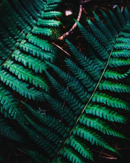 Leaf Outdoors Forest Close-up Full Frame Backgrounds Close-up Green Color Textured  Detail Crisscross Fern Leaf Vein
