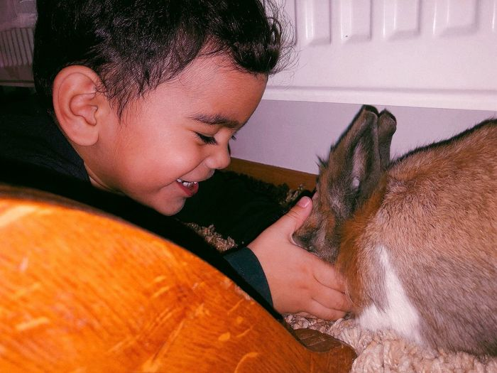 Close-up of cute boy playing with rabbit at home