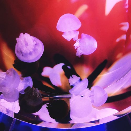 Jellyfish Aquarium Water Colors Colorful Eyem Best Shots Mobilephotography