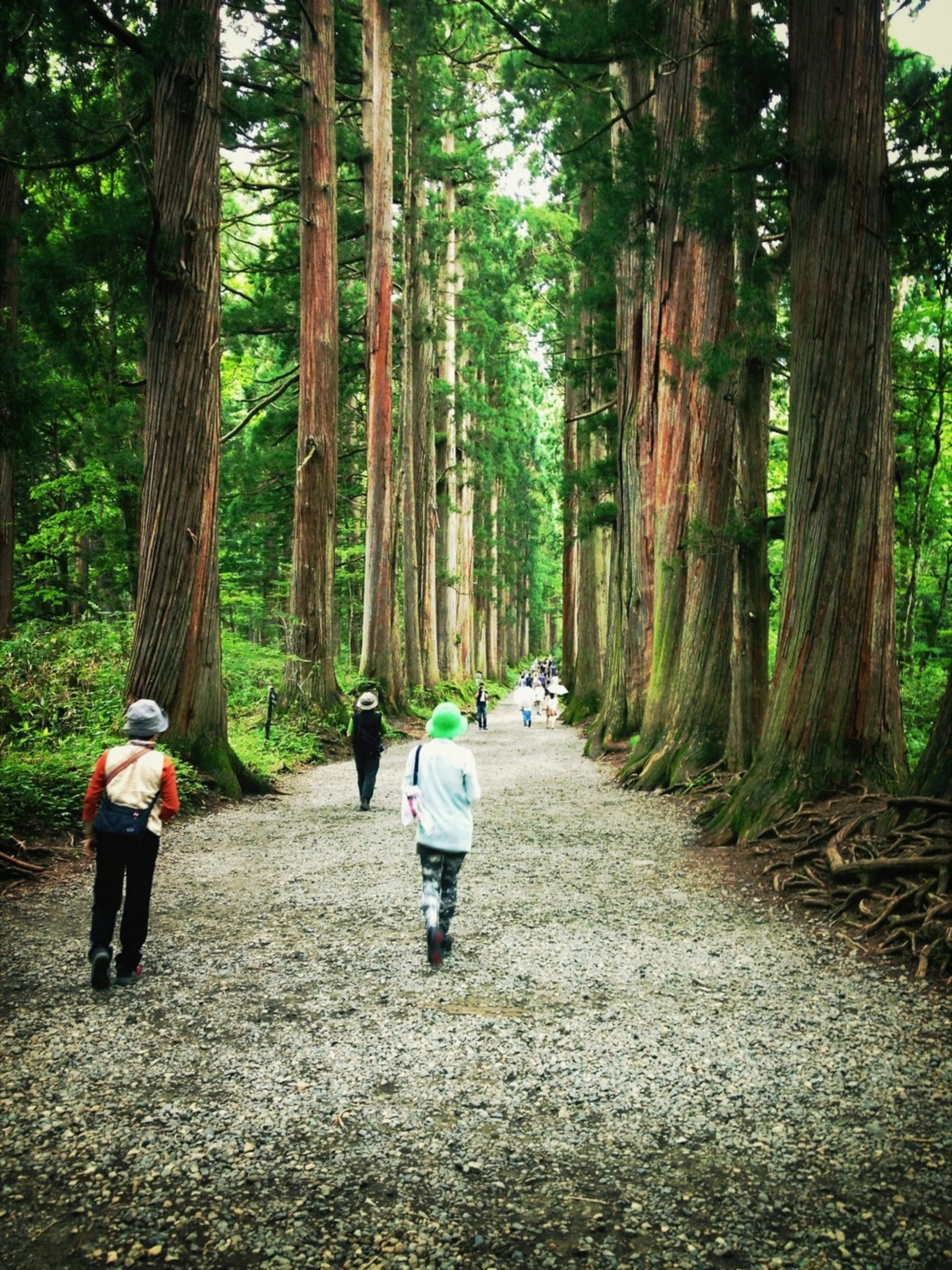 tree, rear view, men, the way forward, lifestyles, leisure activity, full length, walking, person, transportation, forest, tree trunk, togetherness, growth, road, casual clothing, diminishing perspective, footpath