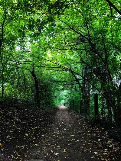 Green The Way Forward Green Color Plant Tree No People Growth Nature Day Outdoors Shadow Beauty In Nature Tranquility Plant Part