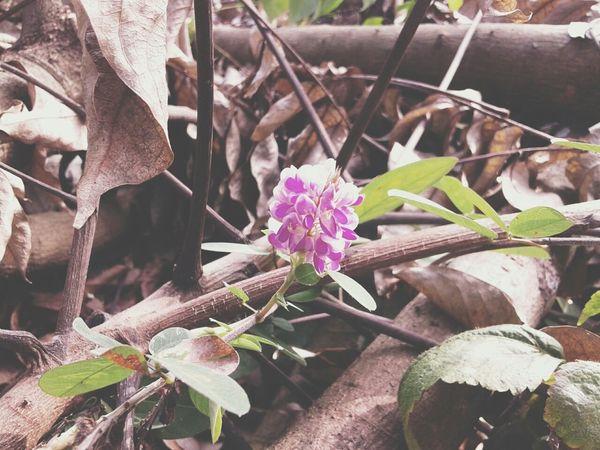 Hello Check This Out Enjoying Life Vietnam Bắc Giang Flower