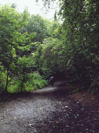 Walk in the woods Edinburgh Forest Walking Lone Figure