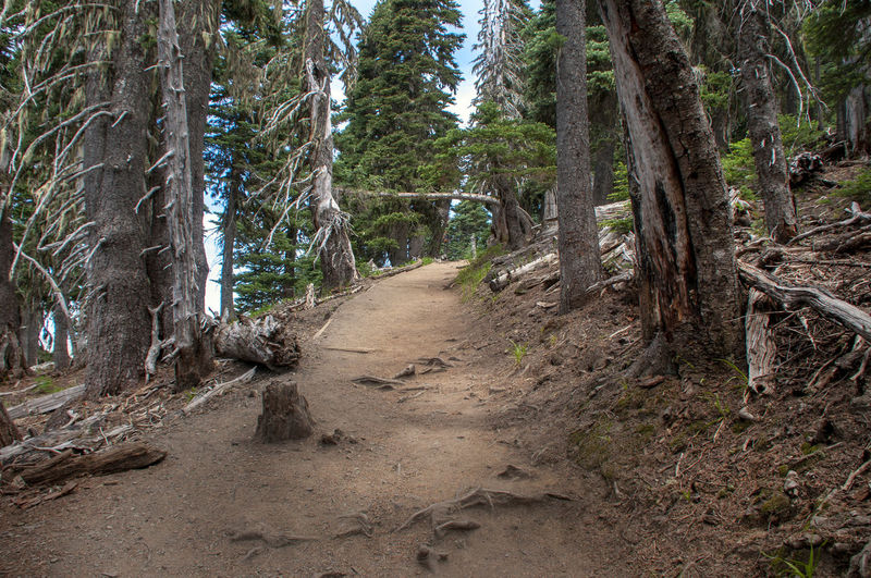 Trail to