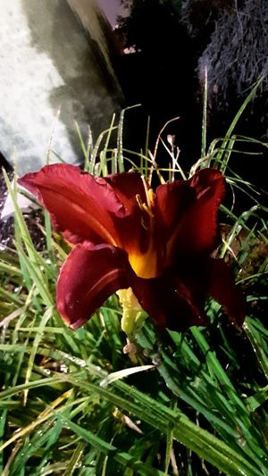 Beautiful Darkness Flowers Darkness Beauty In Nature Beautiful Darkness