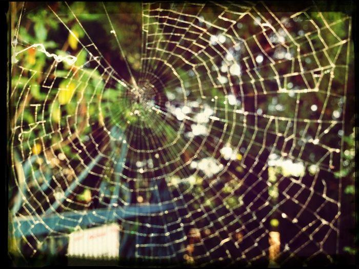 Nature Spider Spider Web