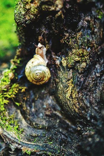 Nature On Your Doorstep The Pinnacles Columbia, Missouri Snail